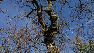 Monster Face Tree