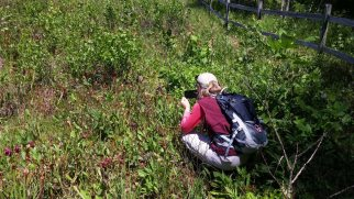 Penny Finds A Pitcher Plant