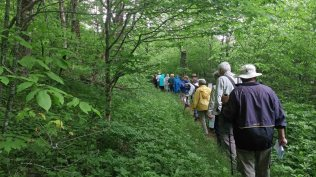 Long Line of Botanizers