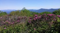 Rhodie Thicket View