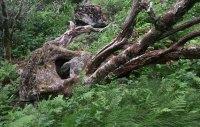 Rock Eating Squid Tree