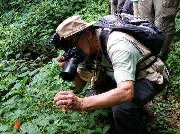 Jim Captures a Columbine (Aquilegia canadensis)