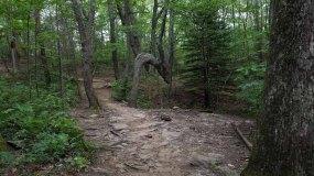 Pointing Tree