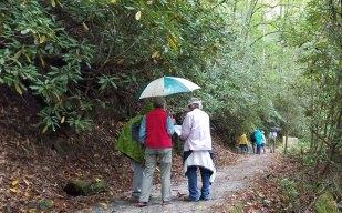 On the Estatoe Trail