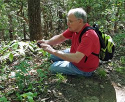 Ken & Bowman's Root; Fawn's Breath (Gillenia trifoliata)