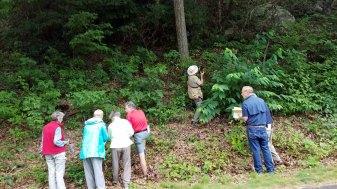 Lots of Plants at Log Hollow