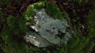 Lichen and Moss