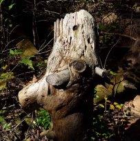 Trail Critter Tree