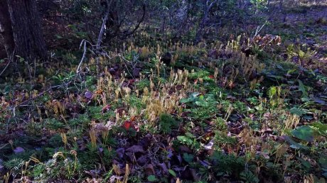 Sea of Fruiting Bodies