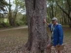 Wes's Tree