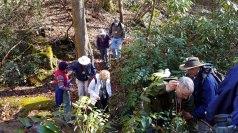 One of Several Creek Crossings