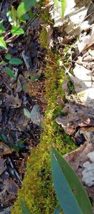 Mossy Log
