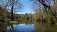 The Bass Pond