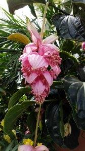 Conservatory Plant