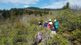 Wandering in the Fetterbush Barrens