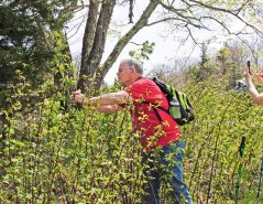 Watch out For Those Brambles!