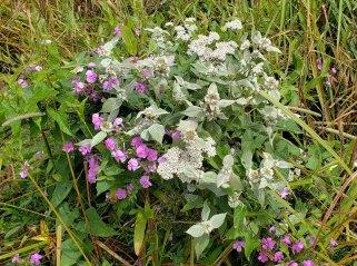 Meadow Bouquet