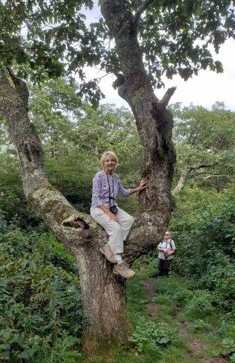 The Sling-shot Tree