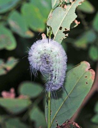 That Caterpillar Gets Around!