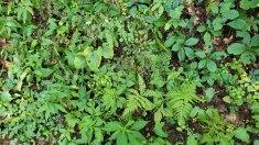 Mix of Ferns