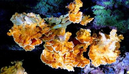 Log Mushroom