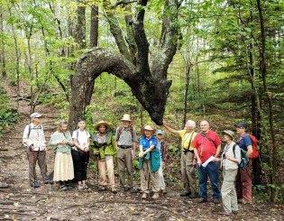 At The Dragon Tree