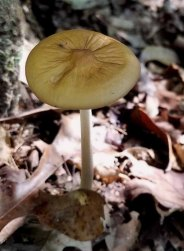 Lumpy Mushroom