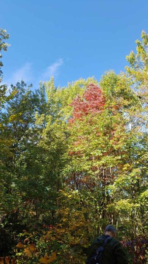 Who Says There's No Fall Color?