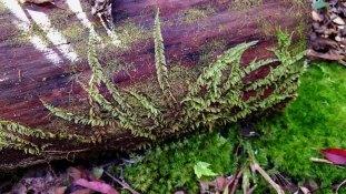 Train Tracks Moss
