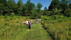Wandering the Meadow