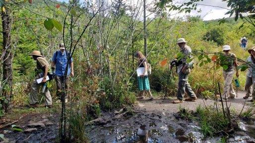 Skirting the Swamp