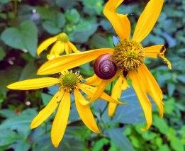 Snail Pollinator