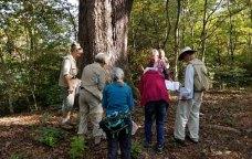 Gather Round the Grandfather Tree
