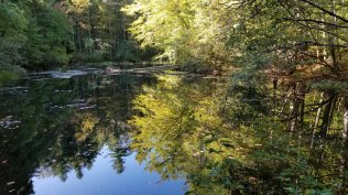 Reflection Pond