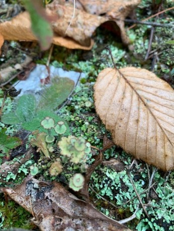 Still Life With Lichens - 3