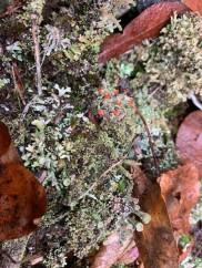 Still Life With Lichens - 2