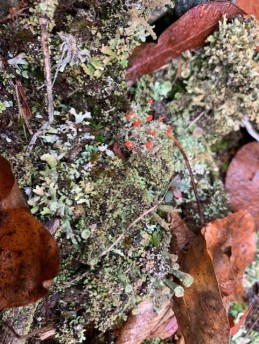 Still Life With Lichens - 2