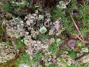 Still Life With Lichens - 1