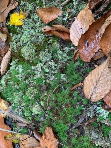 Still Life With Lichens - 4