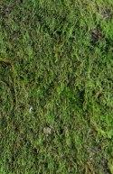 Mystery Moss