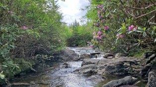 Flat Laurel Creek