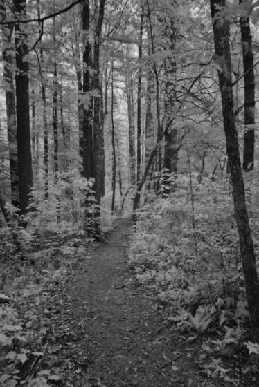 Walk iin the Woods