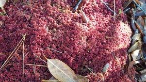 Wintery Sphagnum Moss