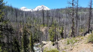 Fire damage on the Chush Falls Trail, Bend
