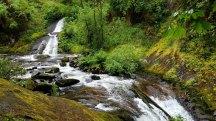 Sweet Creek Falls Trail, Mapleton