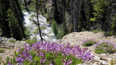 The Cascades & Penstemon, Chush Falls Trail, Bend