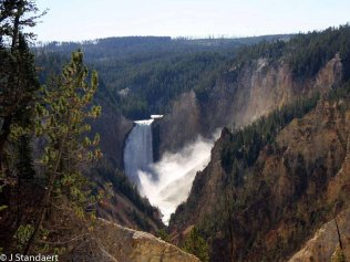 Lower Falls - Grand Canyon of the Yellowstone