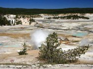 Porcelain Basin - Norris Geyser Basin