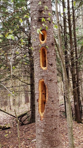 Woodpecker Work!