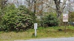 Catawba Rhododendron; Mtn. Rosebay (Rhododendron catawbiense)